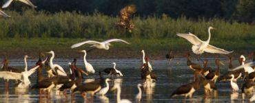 Наблюдение за птицами в Сербии